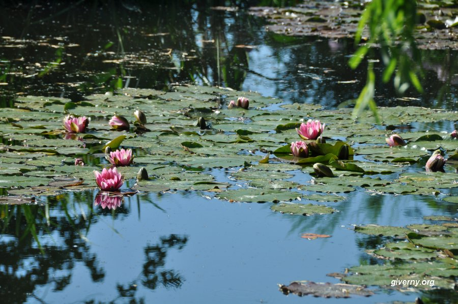 Superior Water Lilies In Claude Monetu0027s Pond In Giverny