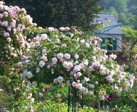 http://giverny.org/guide/rose-garden.jpg